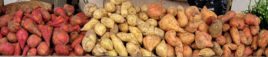 De zoete aardappel heeft verschillende verschijningsvormen